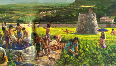 Grape Harvest1