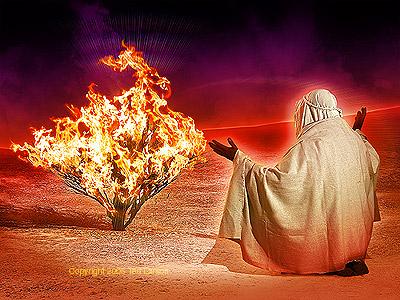 the-burning-bush