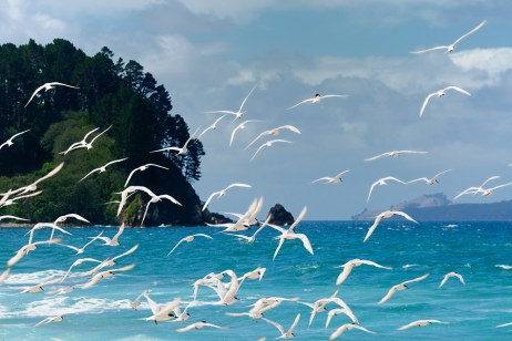 let the birds multiply on the earth