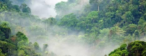 Let the earth produce vegetation