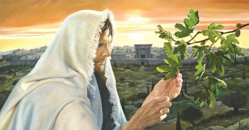 learn this parable from the fig tree