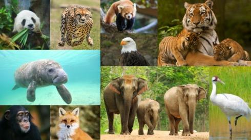 Creation-wildlife