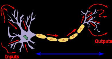 Neuron3