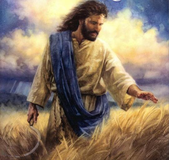 sickle-jesuswheat
