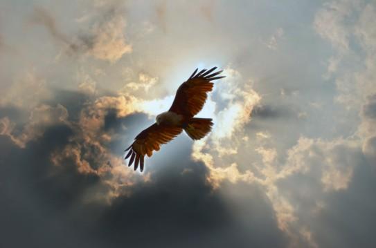 eagle-sky