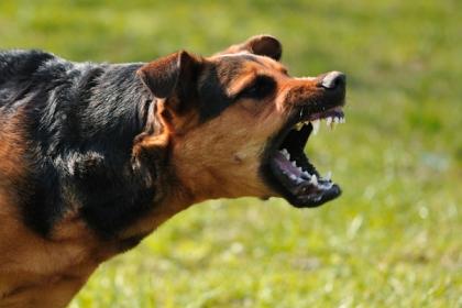 Rabid-dog