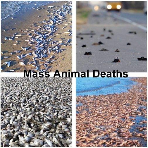 animal-die-offs