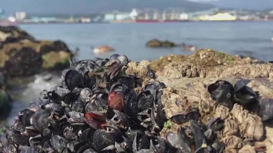 Extreme heat boils Canada's waters and shellfish