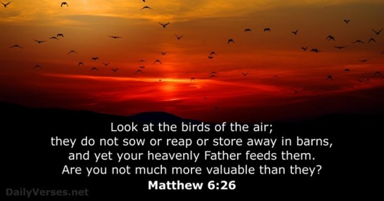 your heavenly Father feeds them