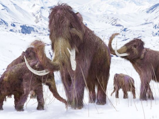 extinction of the woolly mammoth some3600 years ago
